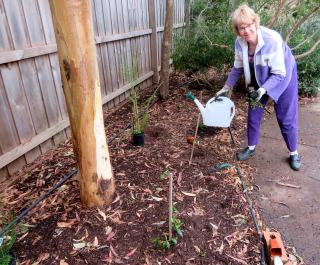 Holland Road replanting Grace T
